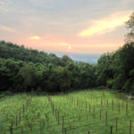 Twin Oaks Tavern View